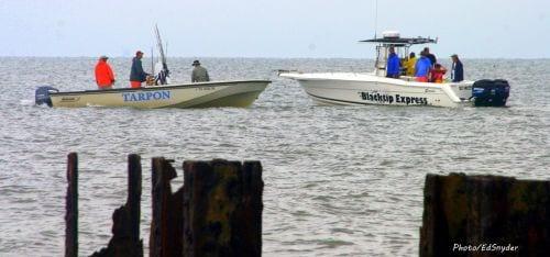 Tarpon express and black tip express fishing rollover pass for Rollover pass fishing report