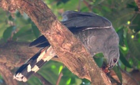 Crane Hawk and bat s