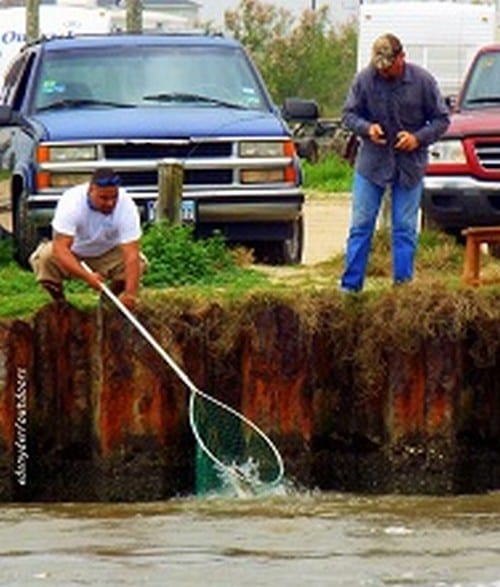 Trout action at rollover pass crystal beach local news for Rollover pass fishing report
