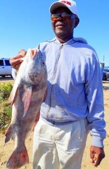 Houston angler Charles Davis hefts this nice keeper eater drum caught on shrimp