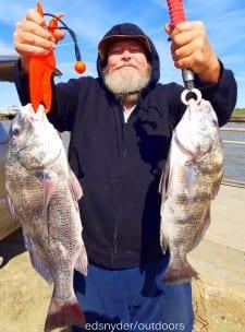 US Postal worker Al Jurica took these nice keeper eater drum on a Miss Nancy shrimp