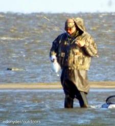Extreme Bay wader nabs a flounder