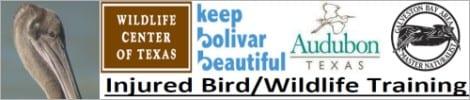 Injured Bird/Wildlife Workshop